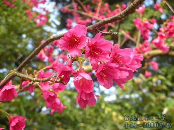 9901-22 陽明山花季_0073.jpg