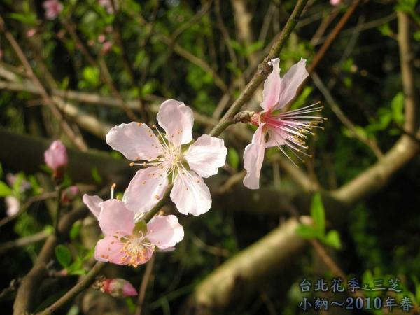 9901-22 陽明山花季_0080.jpg