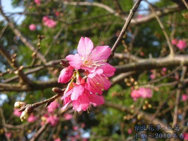 9901-22 陽明山花季_0082.jpg