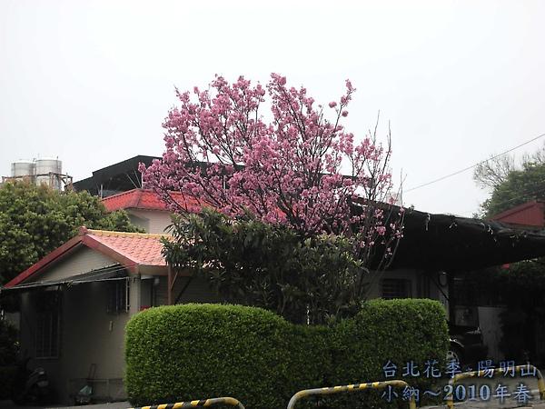 9902-17 陽明山花季 2_0001.jpg
