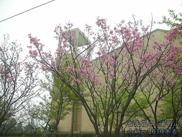 9902-17 陽明山花季 2_0004.jpg