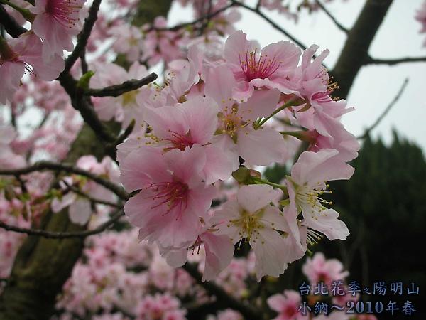 9902-17 陽明山花季 2_0011.jpg