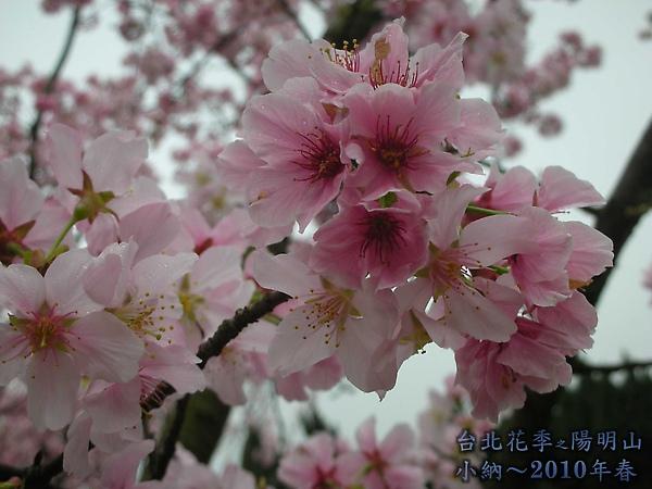 9902-17 陽明山花季 2_0012.jpg