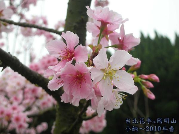 9902-17 陽明山花季 2_0014.jpg