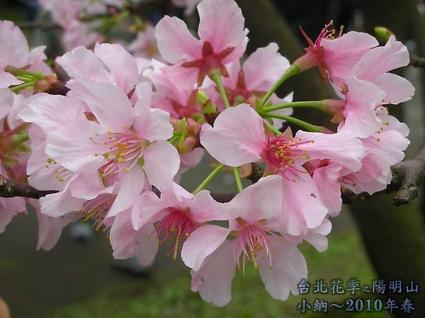 9902-17 陽明山花季 2_0016.jpg