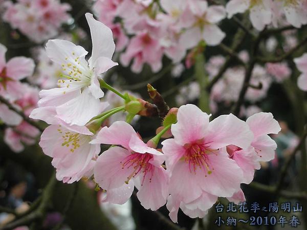 9902-17 陽明山花季 2_0019.jpg