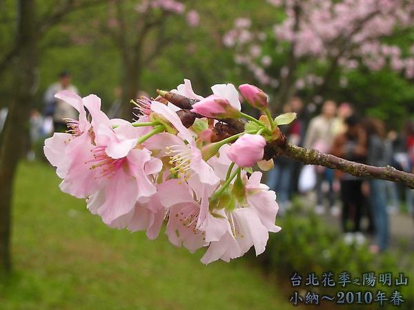 9902-17 陽明山花季 2_0024.jpg