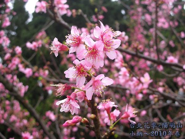 9902-17 陽明山花季 2_0028.jpg