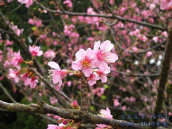 9902-17 陽明山花季 2_0029.jpg