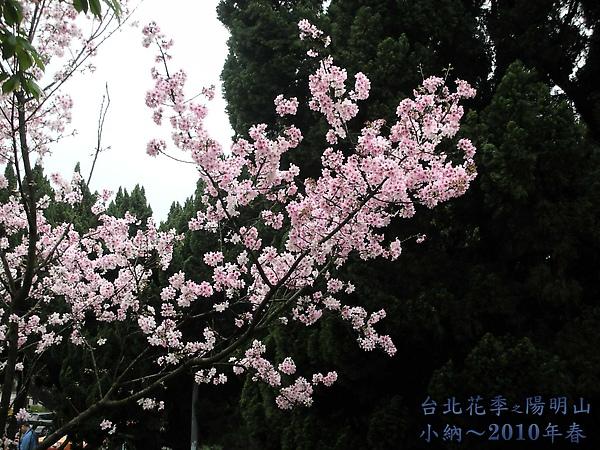 9902-17 陽明山花季 2_0030.jpg