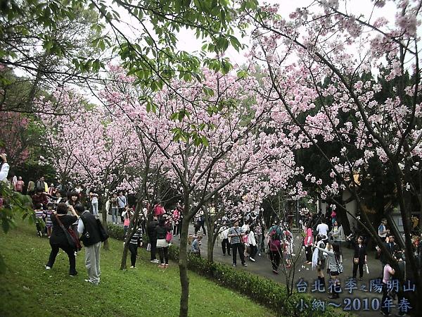 9902-17 陽明山花季 2_0032.jpg