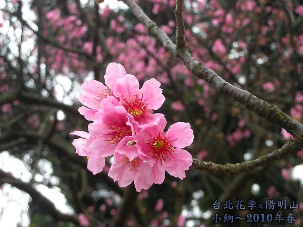 9902-17 陽明山花季 2_0034.jpg