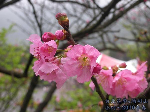 9902-17 陽明山花季 2_0038.jpg