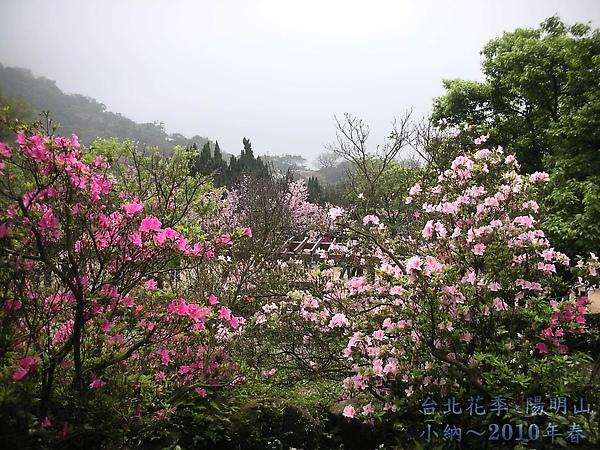 9902-17 陽明山花季 2_0046.jpg