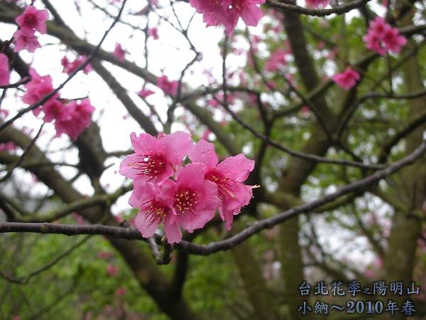9902-17 陽明山花季 2_0056.jpg