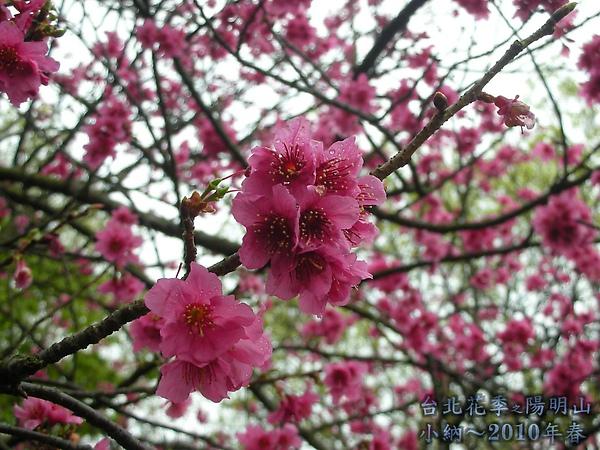 9902-17 陽明山花季 2_0057.jpg