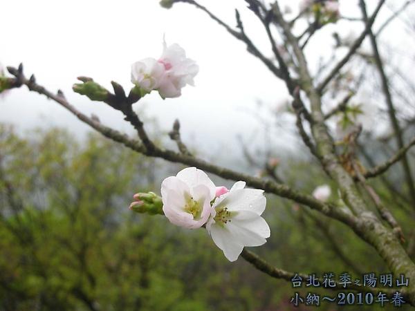 9902-17 陽明山花季 2_0060.jpg