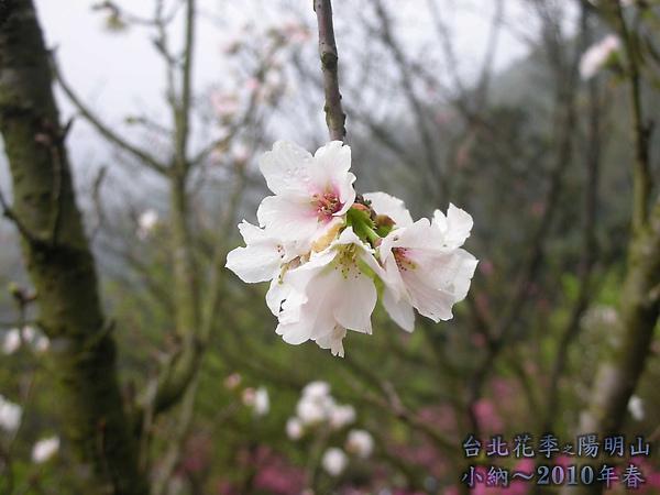 9902-17 陽明山花季 2_0063.jpg