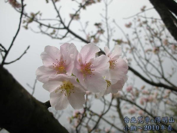 9902-17 陽明山花季 2_0064.jpg