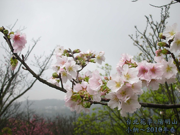 9902-17 陽明山花季 2_0066.jpg