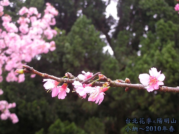 9902-17 陽明山花季 2_0088.jpg