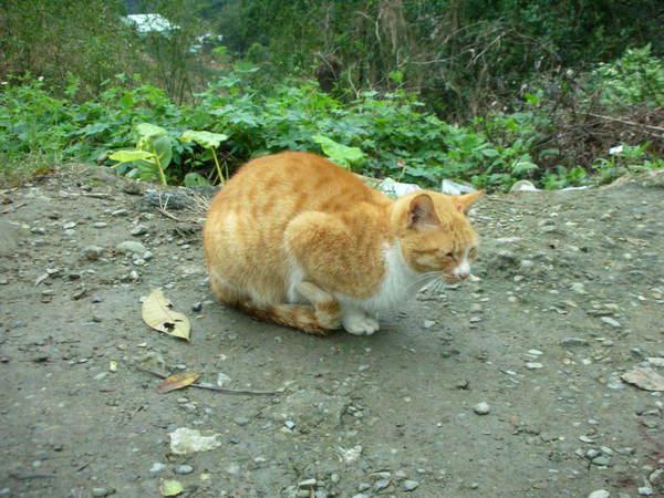 坐貓纜到貓空看到的懶貓  不太甩我們的懶貓