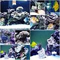 魚缸裡的不同種類魚