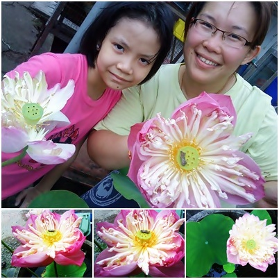 Lotus . Shiuan and Li Shi