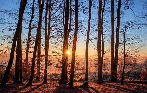 forest-1950402_960_720.jpg