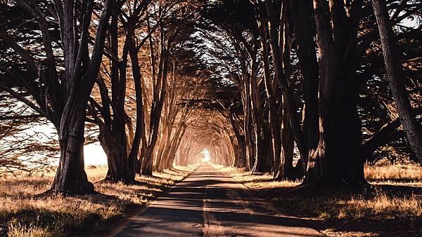 road_trees_shadow_119606_1280x720.jpg