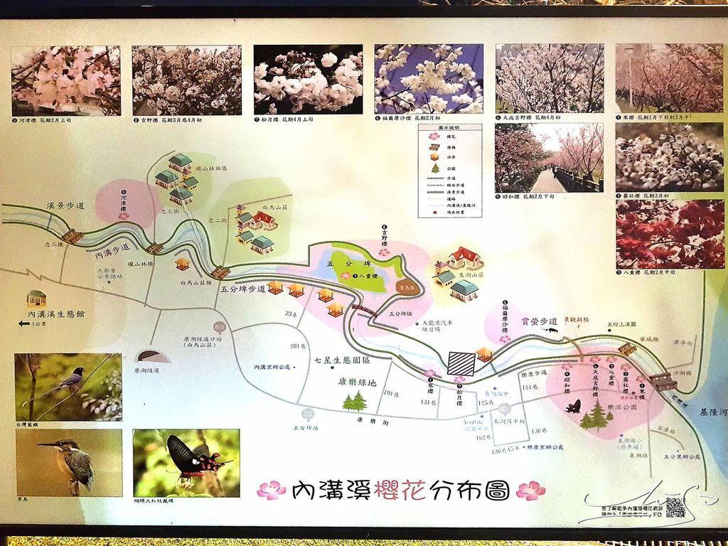 東湖樂活公園夜櫻 (5).jpg
