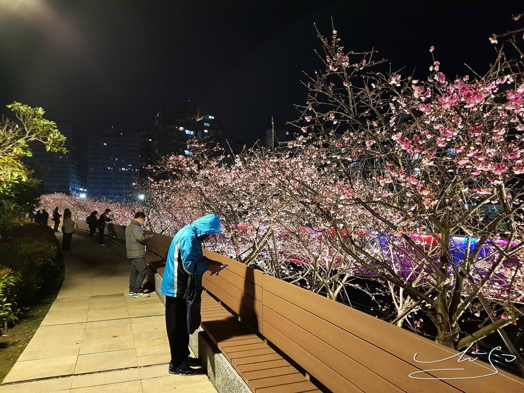 東湖樂活公園夜櫻 (9).jpg