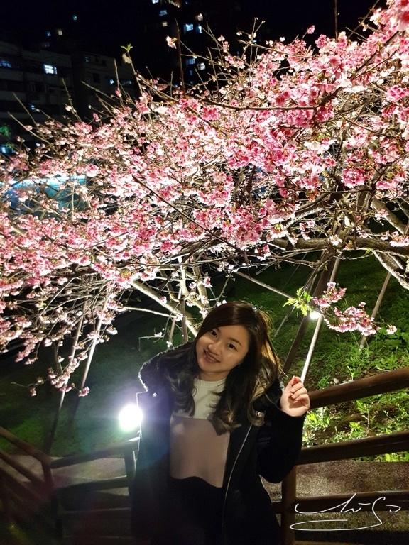 東湖樂活公園夜櫻 (11).jpg