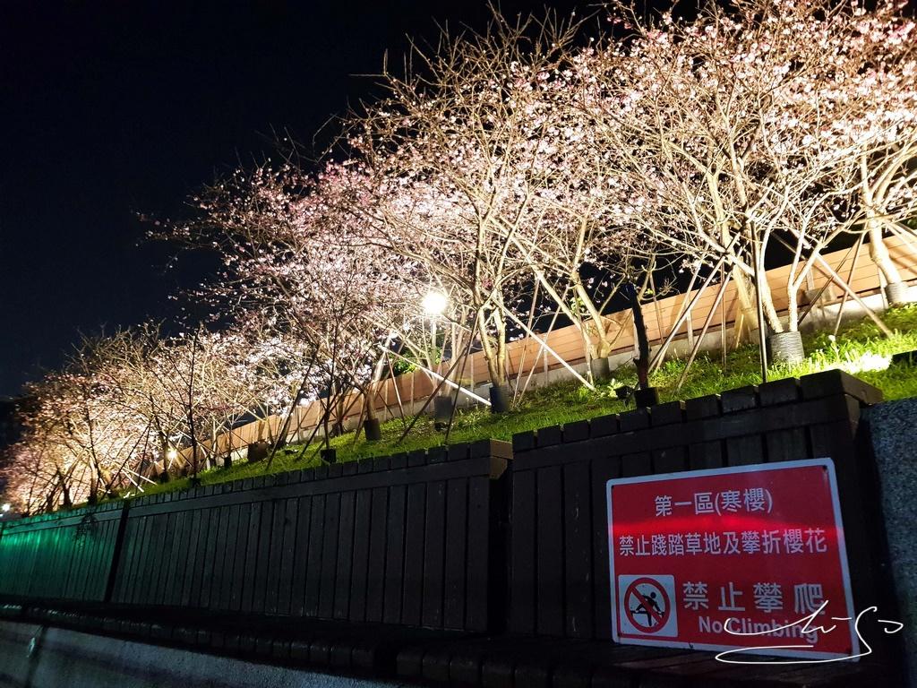 東湖樂活公園夜櫻 (19).jpg