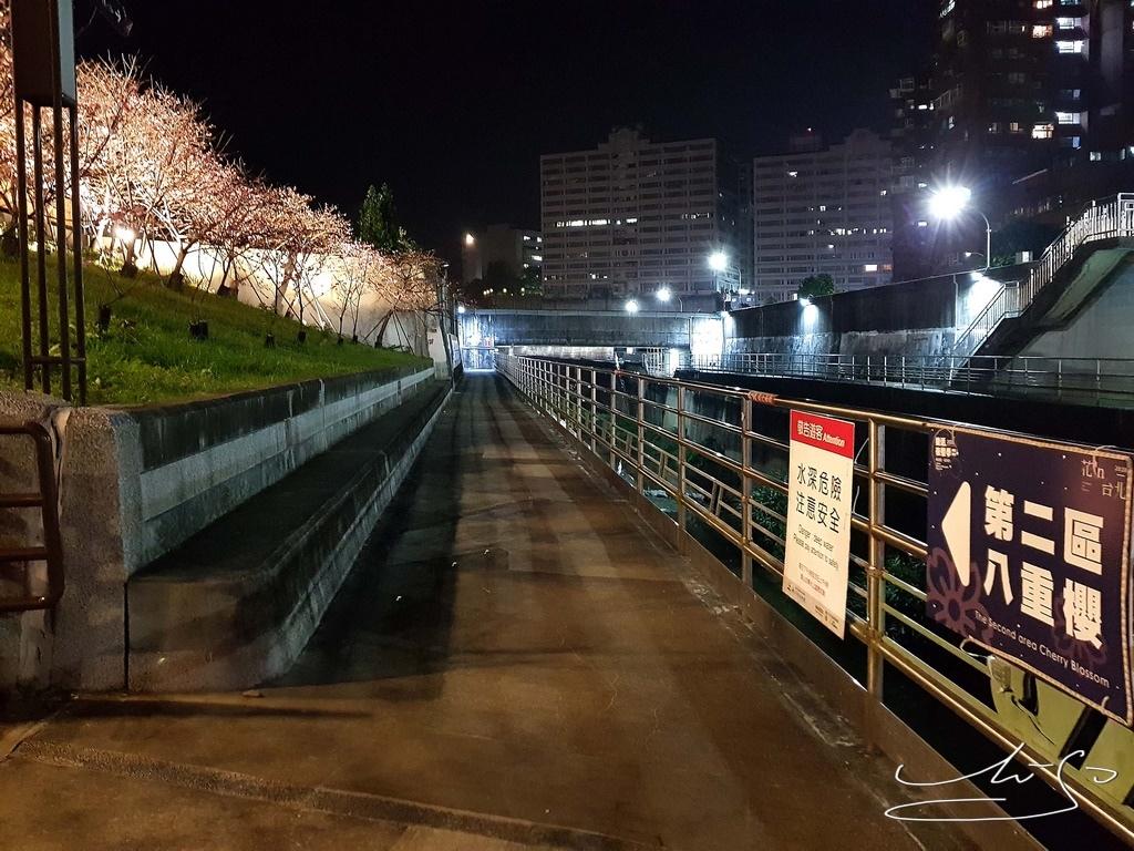 東湖樂活公園夜櫻 (20).jpg