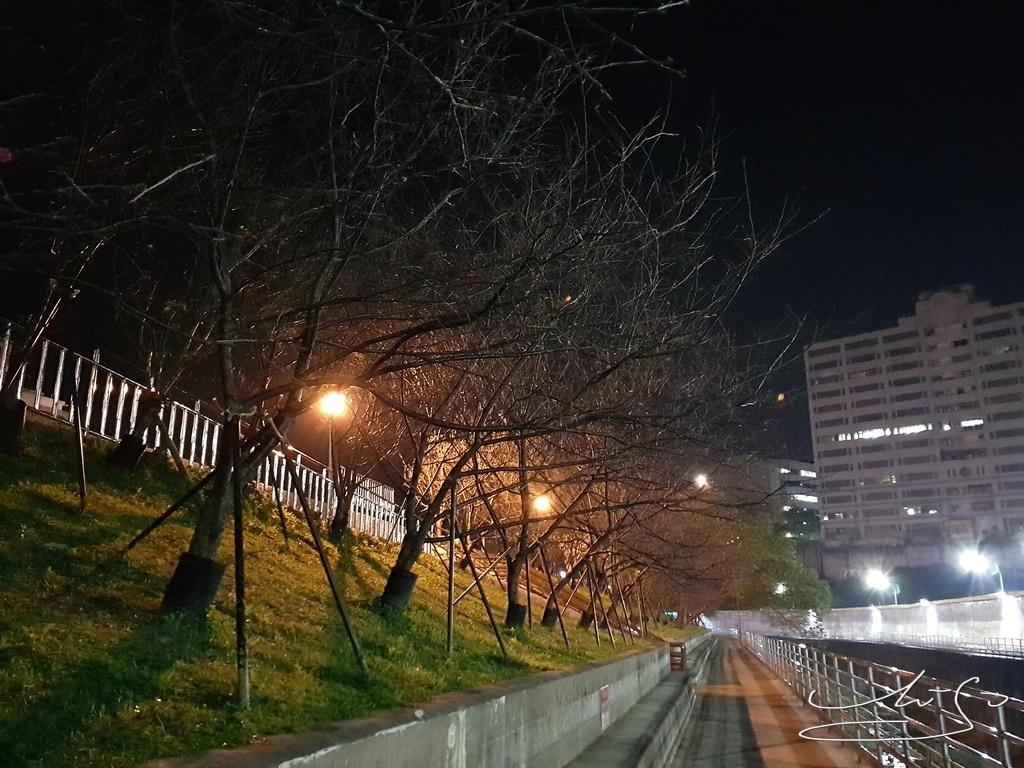 東湖樂活公園夜櫻 (23).jpg