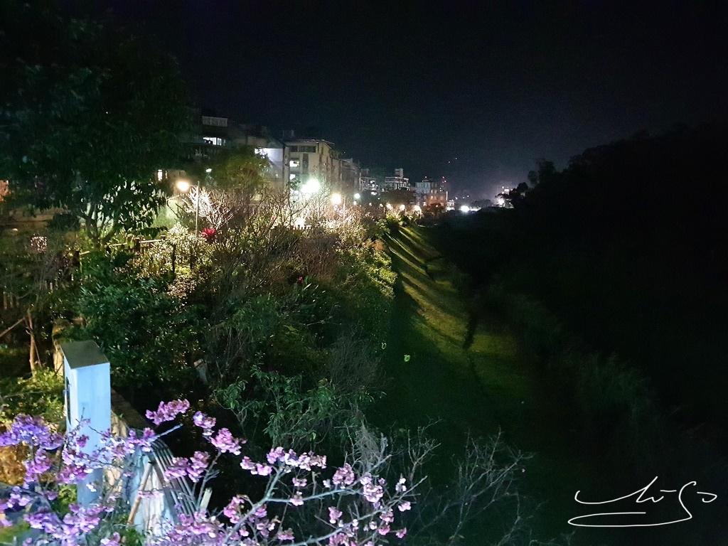 東湖樂活公園夜櫻 (29).jpg