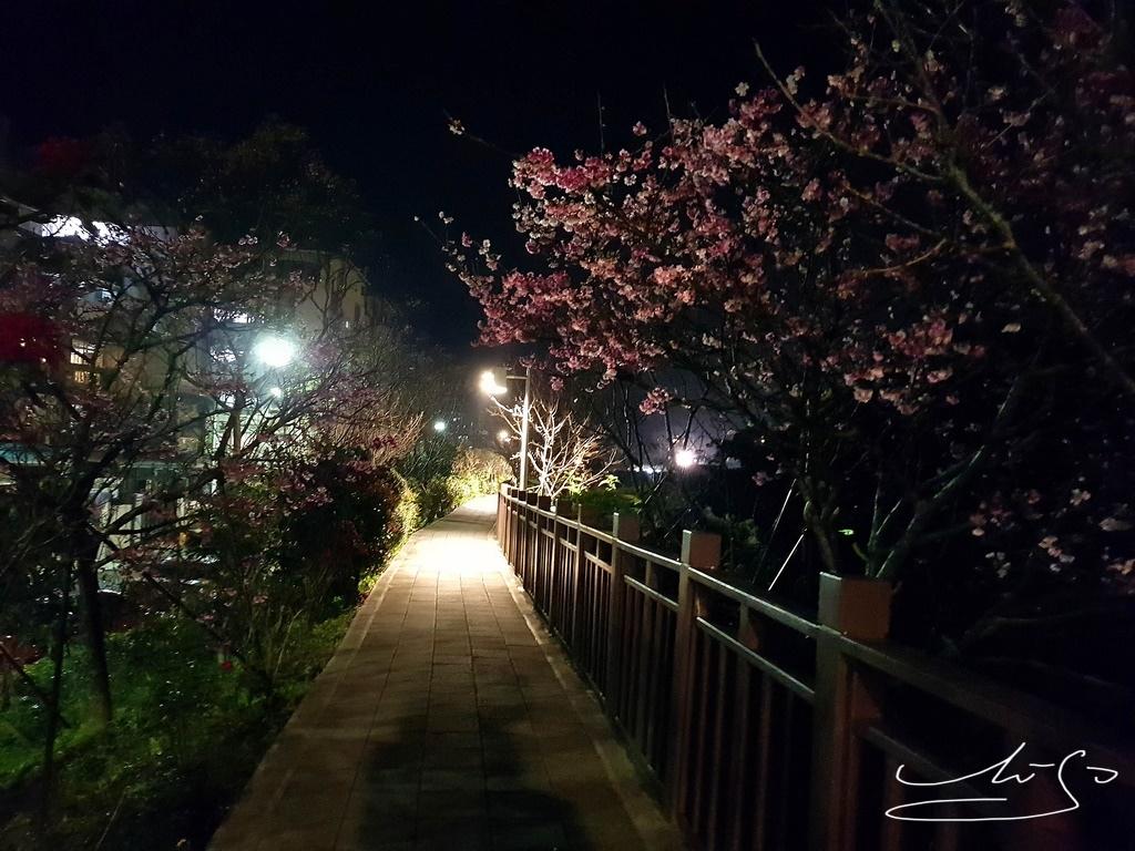 東湖樂活公園夜櫻 (37).jpg