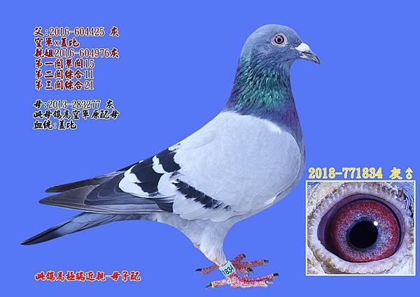 空軍-主力鴿系