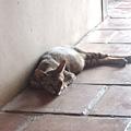觀音亭內悠閒的貓2