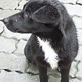 明池停車場遇見像臺灣黑熊的小黑