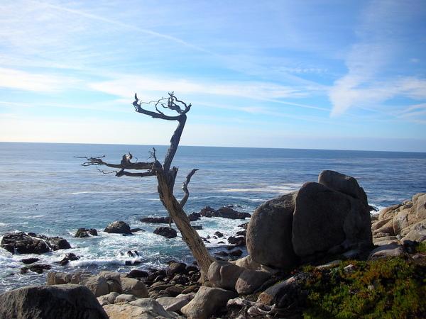 Pebble Beach-17-mile-drive