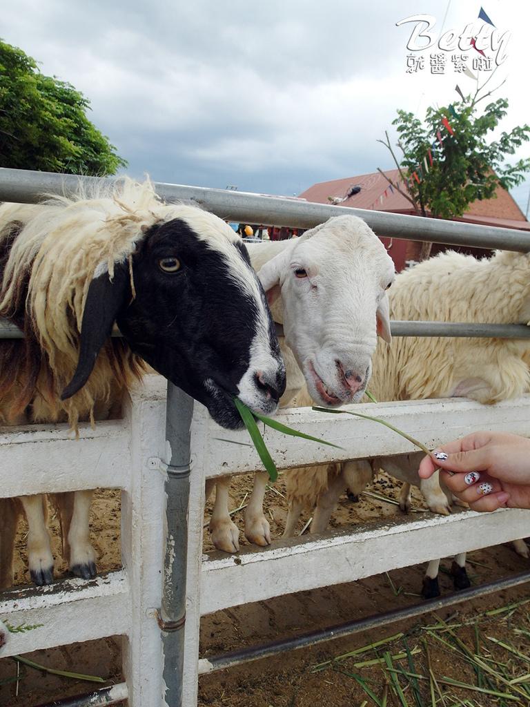 瑞士綿羊農莊 (24).jpg