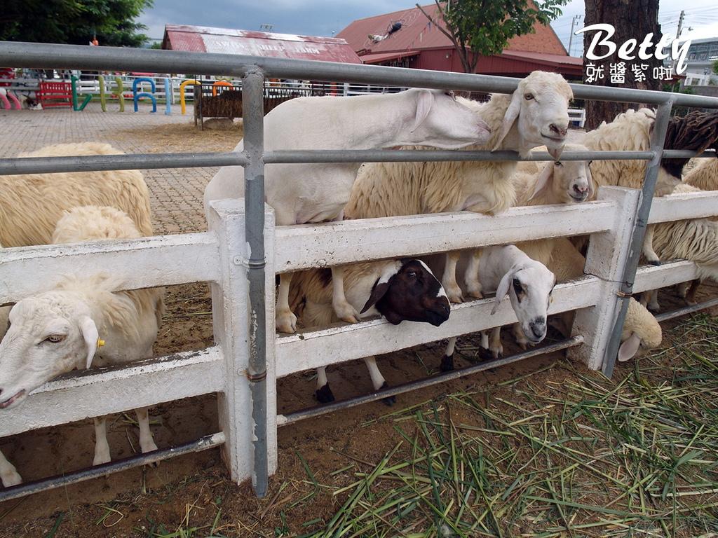 瑞士綿羊農莊 (23).jpg