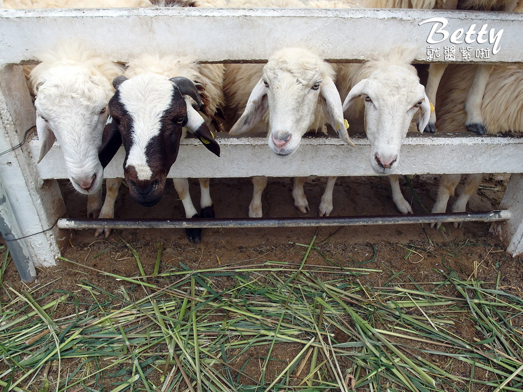 瑞士綿羊農莊 (26).jpg