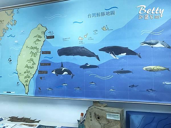 20170528多羅滿賞鯨 (5).jpg