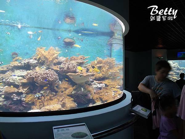 20170819國立海洋生物博物館 (15).jpg