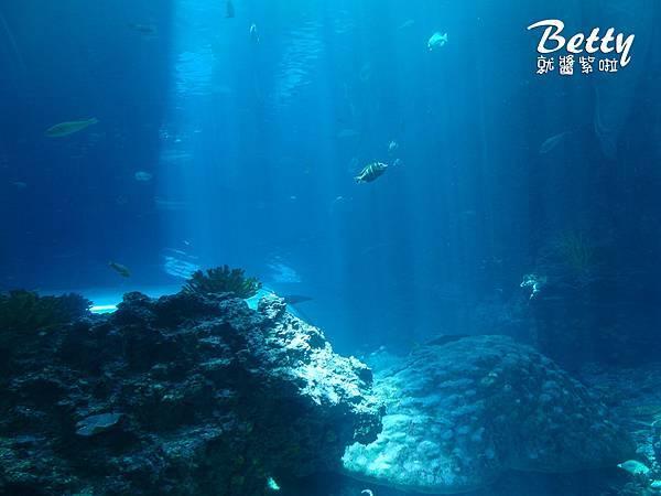 20170819國立海洋生物博物館 (18).jpg