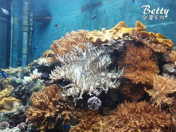 20170819國立海洋生物博物館 (16).jpg