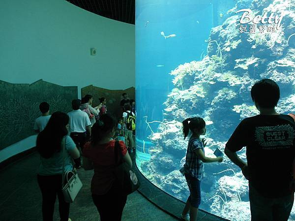 20170819國立海洋生物博物館 (17).jpg